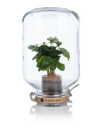 Pikaplant The Jar Coffee Arabica 29 cm