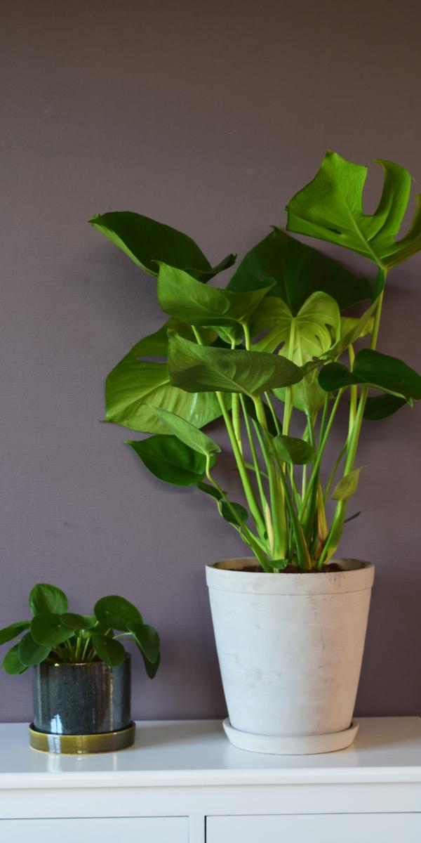 greenlifestylestore plant
