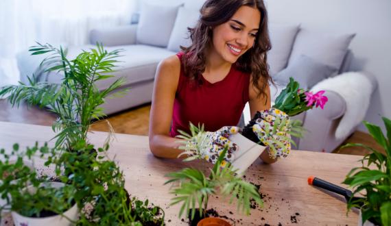 Hoe je op een groene manier vliegjes bij je kamerplanten bestrijdt