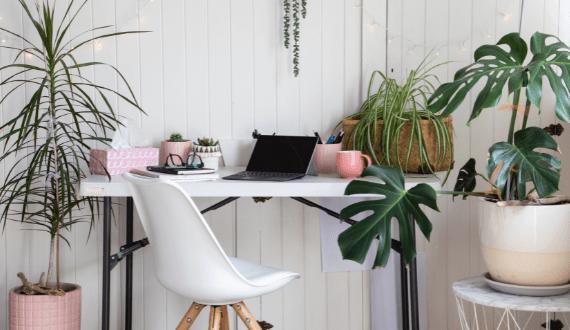 thuiswerken met kamerplanten